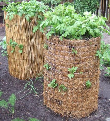 Kartoffeln anbauen anleitung gartenhaus gebraucht for Wann kartoffeln pflanzen